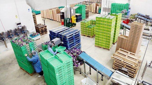 El Gobierno de CLM destina 4,7 millones a Organizaciones de Productores de Frutas