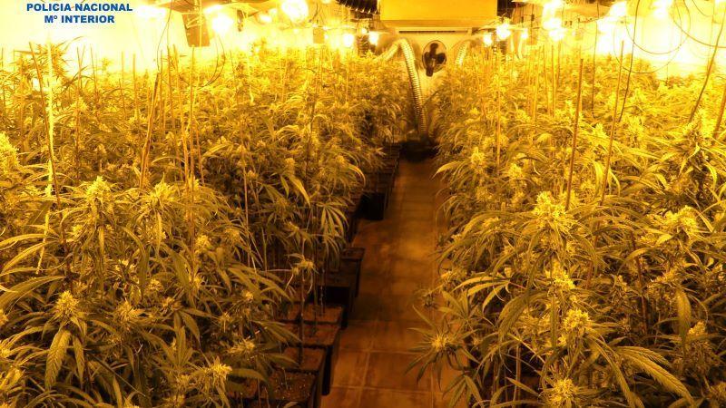 Desmantelado un cultivo ilegal de marihuana en Bargas con hasta 1.382 plantas