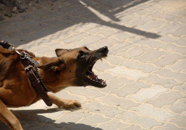 Encuentran muerta a una mujer de 59 años devorada por su perro en su vivienda