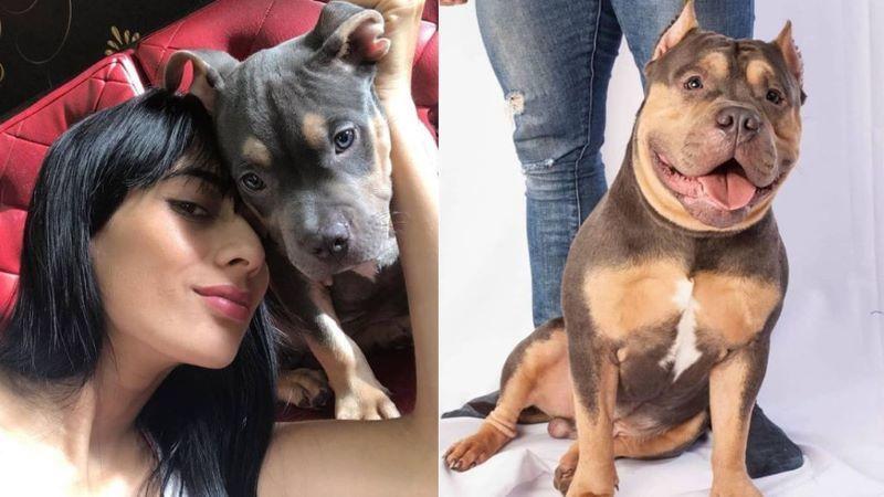 Pide justicia para su perro, muerto en un vuelo: le encuentra aplastado por maletas