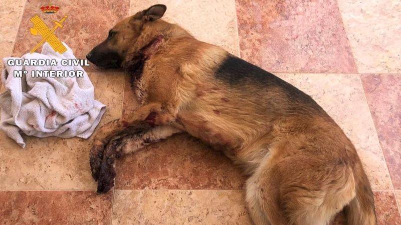 3 detenidos por extorsión a un joven en Caudete y causar graves daños a su perro