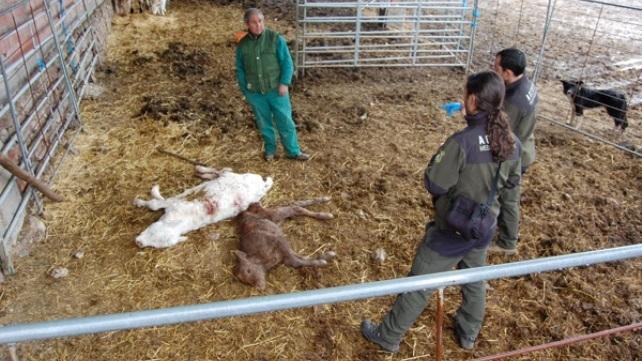 Organizan un taller de prácticas ganaderas para reducir los ataques de lobos
