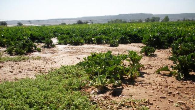 Agricultura ya ha dado 145 permisos excepcionales de caza para controlar la plaga de conejos en explotaciones agrarias de varias provincias