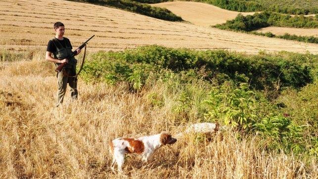 Denuncian que la Ley de Caza permitirá abatir perros y gatos y usar armas a menores
