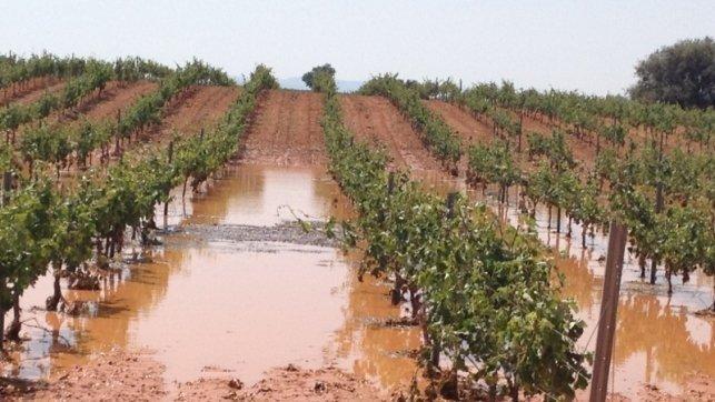 El pedrisco causa numerosos daños en los cultivos de la provincia de Guadalajara
