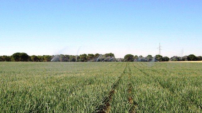 Asaja critica el recorte de la Acequia del Jarama, que afectará a 11.000 hectáreas