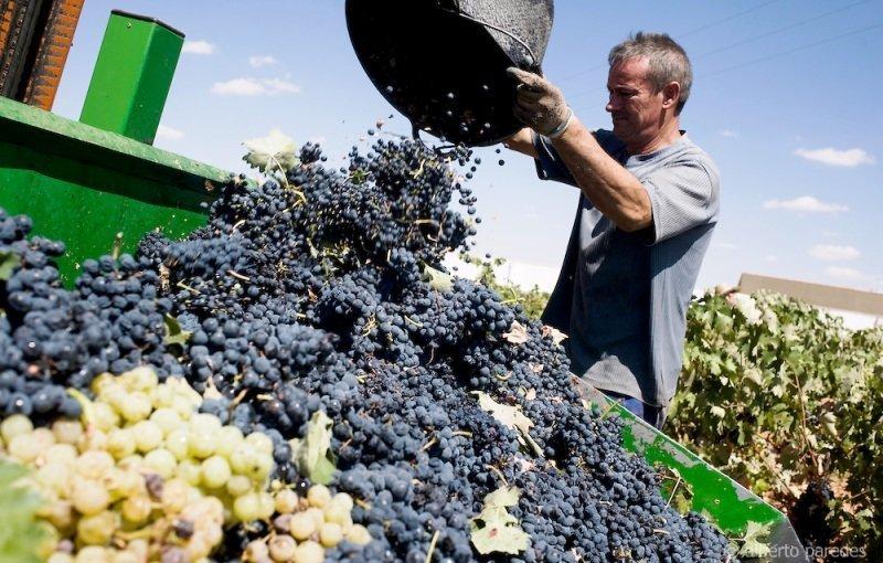La CE garantiza los programas de apoyo al vino hasta 2023