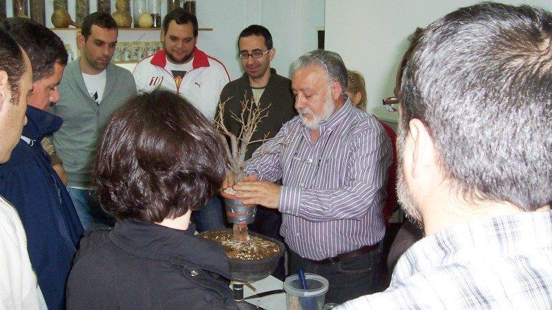 Diputaci n promueve exposiciones y talleres sobre el cultivo del bonsai - Cultivo del bonsai ...