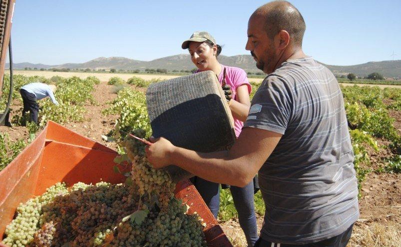 El convenio de la industria vitivinícola de Toledo recoge subidas salariales del 1%