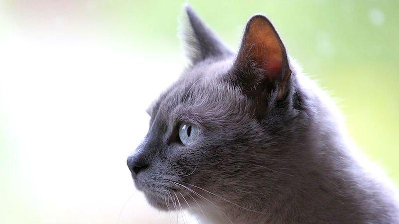 Un gato sobrevive tras pasar un cuarto de hora dentro de una lavadora en marcha