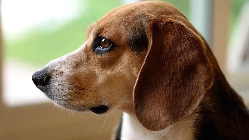 Un perro espera a su dueño fallecido por coronavirus en un hospital durante 3 meses