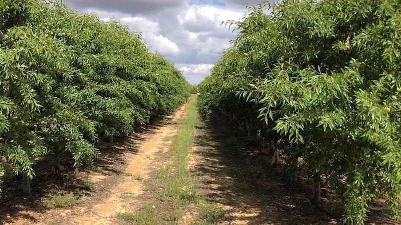 La Junta y la CHS desbloquean la concesión de agua para los regantes de Agramón