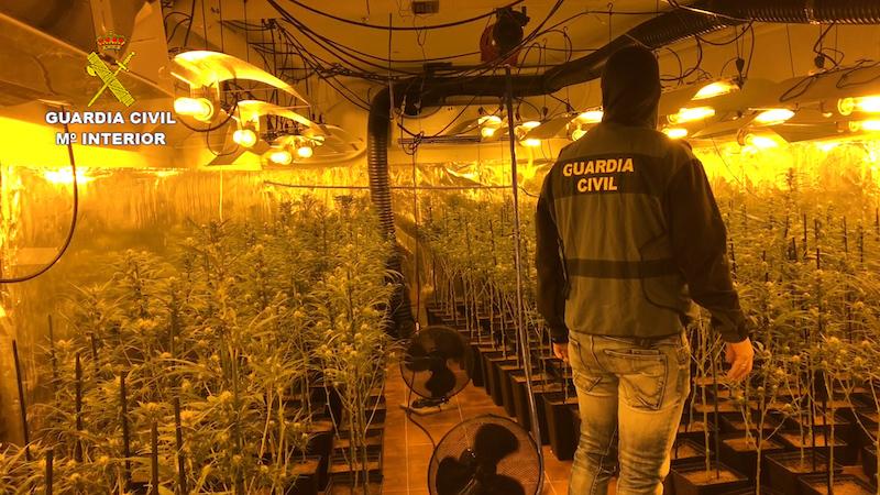 Ocho detenidos en Toledo por cultivo y tráfico de marihuana, más de 5.000 plantas