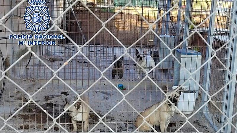 Desmantelan un criadero ilegal de perros y rescatan a 17 cachorros en mal estado
