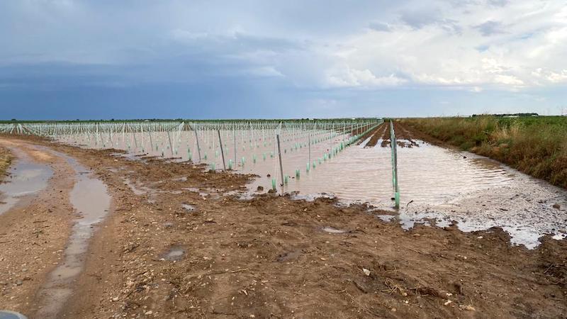 Las lluvias dañan 24.000 hectáreas agrícolas, sobre todo en CLM y Extremadura