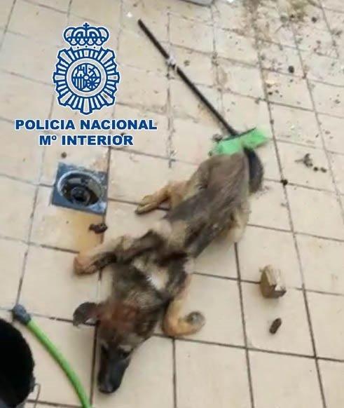 A prisión un joven tras arrojar un perro vivo a una jauría malnutrida para alimentarla