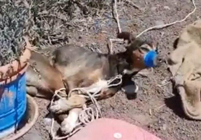 VÍDEO. Duras imágenes: Una pareja asesina brutalmente a un perro asfixiándolo y lo graban