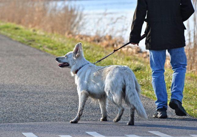 Agrede con la correa del perro a los policías que le multan por no llevar mascarilla