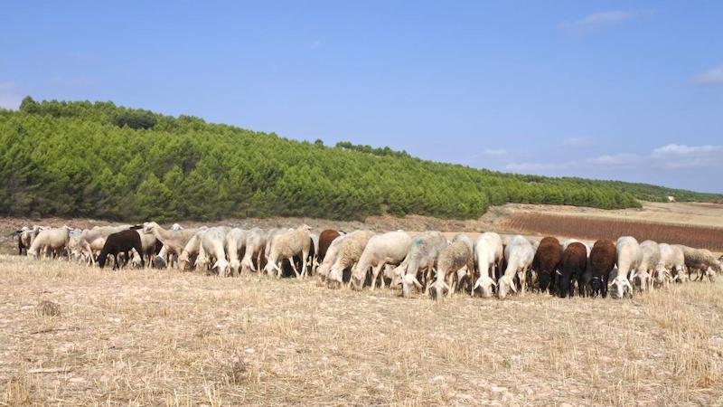 Junta abona ayudas a 2.000 ganaderos por 9,6 millones en el primer semestre del año