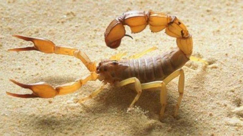 Atacada por un escorpión que estaba escondido en un bolso que compró por internet