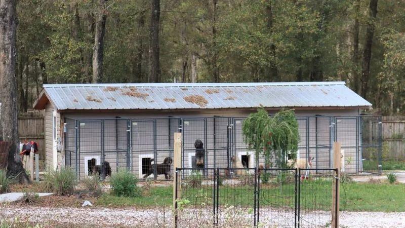 Hallan los cadáveres de 11 cachorros en la basura de una perrera: su dueño no les daba agua