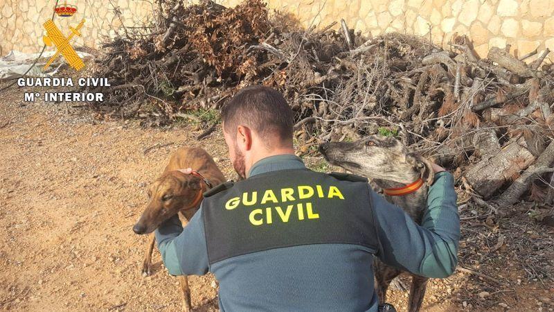 Nueve detenidos por caza furtiva con galgos en cotos de caza de Albacete