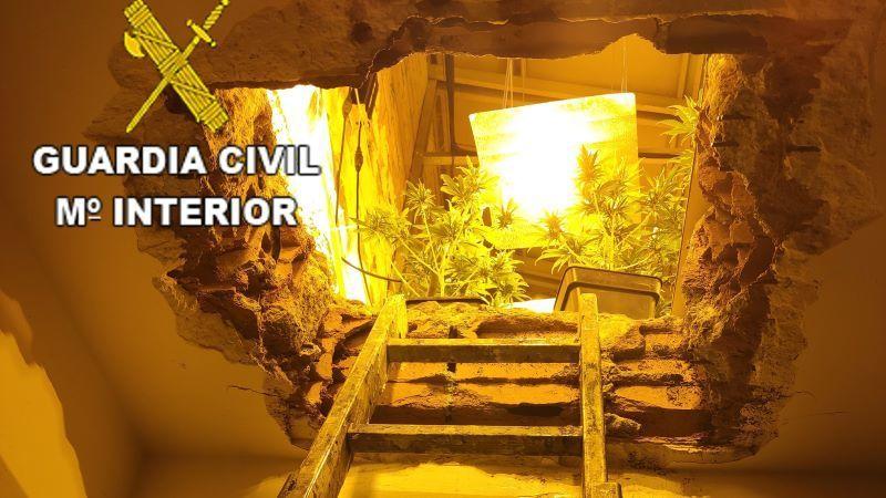 Seis detenidos por cultivo marihuana y usurpar una vivienda en Domingo Pérez