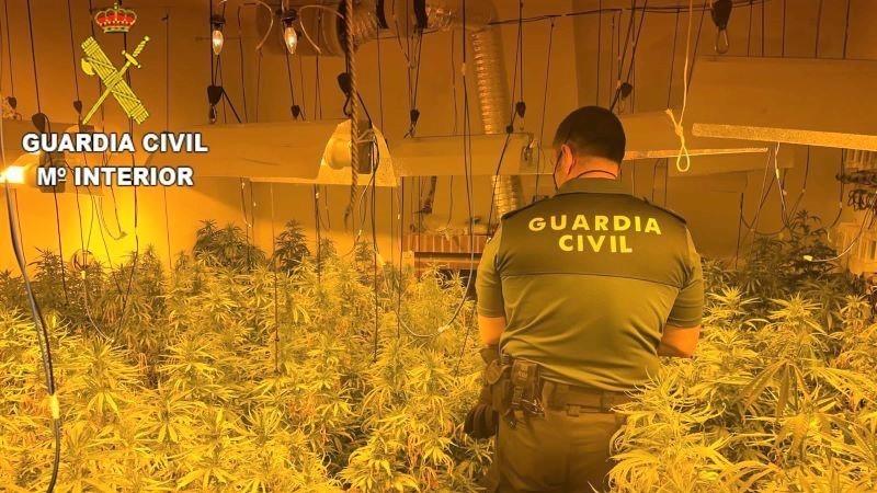Desmantelado un cultivo de marihuana en San Martín de Pusa, con un detenido