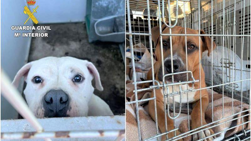 La Guardia Civil rescata a dos perros que fueron abandonados en Escalona