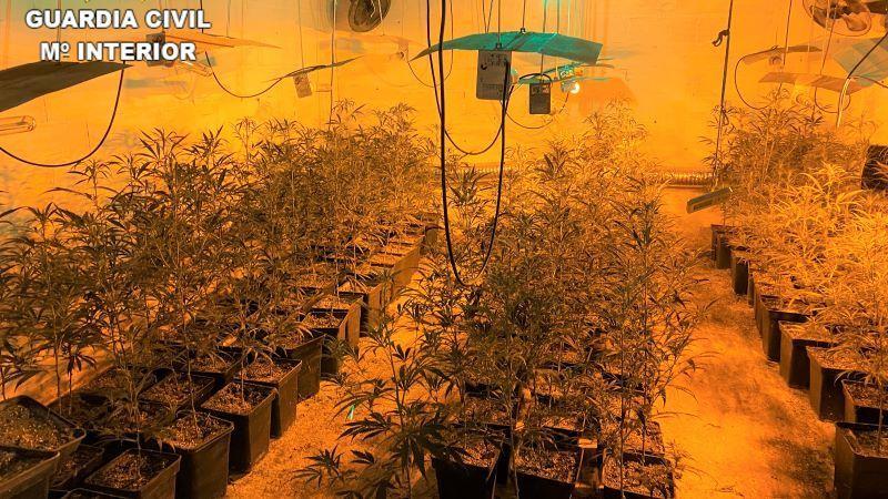 Detenido en Los Navalmorales por cultivar marihuana y por tenencia de armas